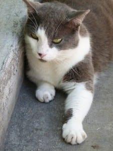 1. Cat.