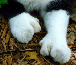 2. cat