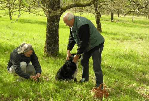 Edouard Aynaud and Farah show a riverboat passenger where to dig for truffles near the village of Les Eyzies in the Dordogne region of France