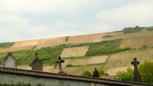 Family vineyards in Chavignol.