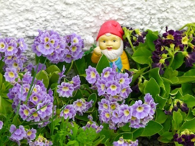 A ceramic troll peeks out of an Icelandic flower garden.