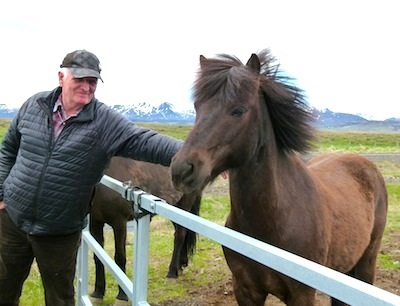 Icelandic horses are about the size of ponies but they are considered horses.