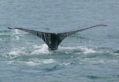 Whale watching was the activity for the day.