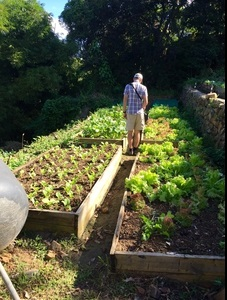 Walking through the terraced vegetable beds at Good Moon Farm