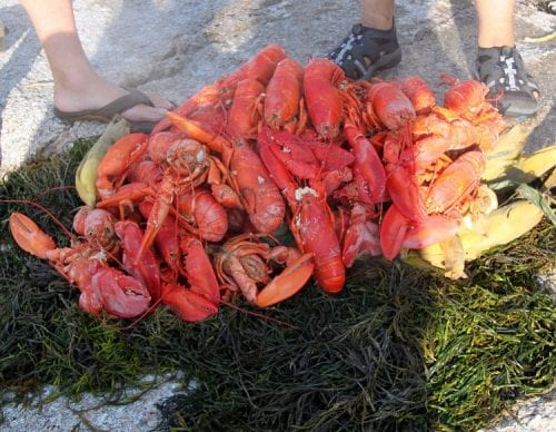 huge bucket of fresh lobster cooked on the beach
