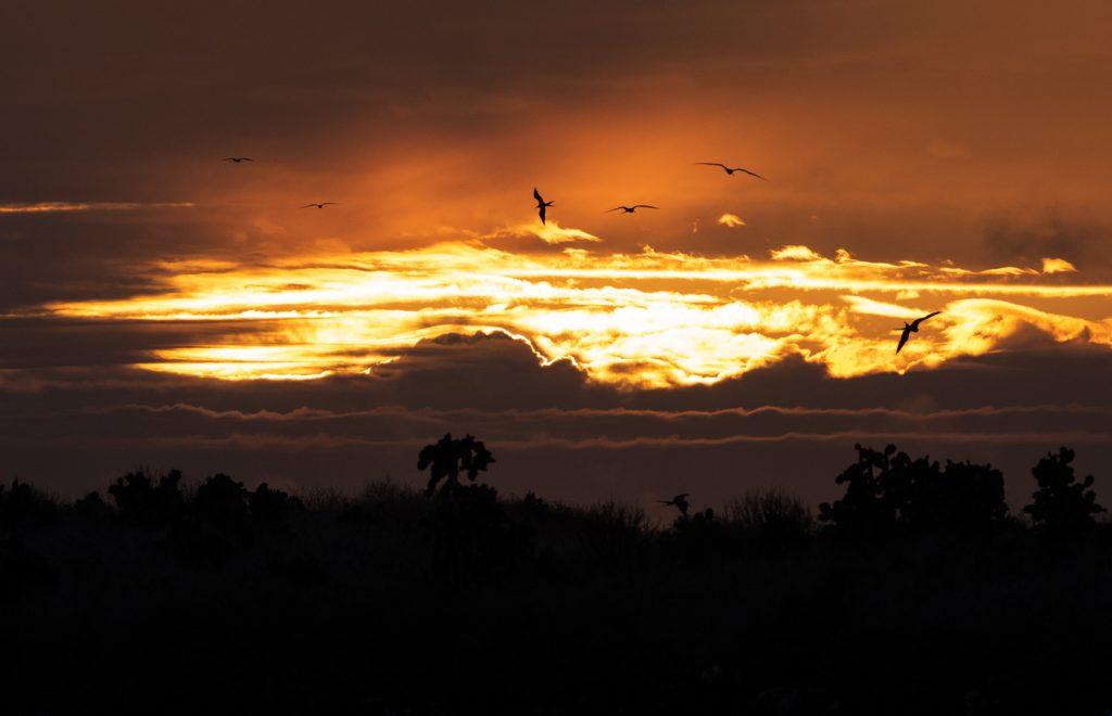 Daniel Allen Galapagos Sunrise