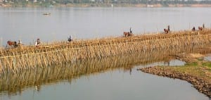 A bamboo bridge in the Tonle Sap River was built in 3 weeks to link the island village of Koh Pen, Cambodia, to the mainland. Because of annual flooding, it will be dismantled in June, to be rebuilt in December