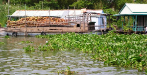 A barge of coconut shells for burning in making bricks