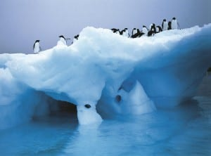 Adelie penguins on icebergh in Antarctica.  (Photo courtesy of Lindblad Expeditions)