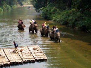 Elephants walk up the Ping River, returning adventurous visitors to Chiang Dao Elephant Camp near Chiang Mai