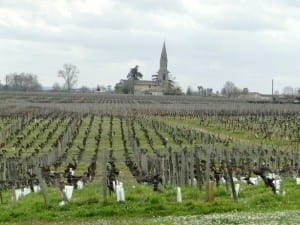 Vineyards - Chateau Siaurac