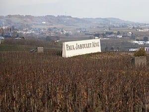Vineyards of Hermitage overlooking the Rhone