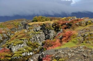 The magical moorlands outside Reykjavik
